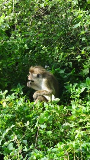 Look, Monkey!